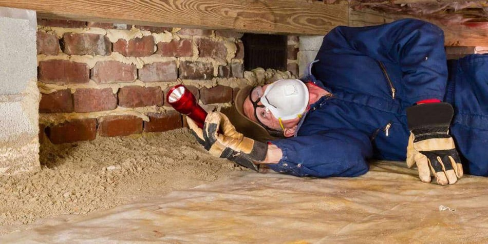 home inspection termites